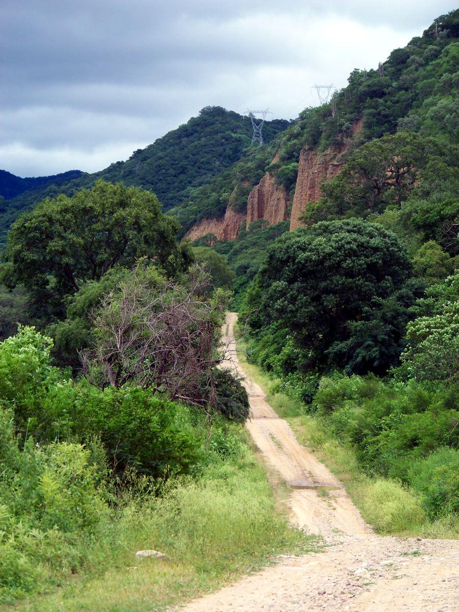 Fotografía Camino En El Bosque Chaqueño Serrano(Gallinato ...