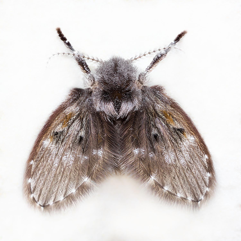 fotograf a mosca de la humedad apilado de javier chiavone