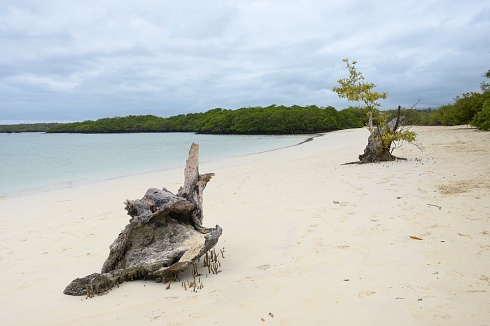 Playa Tortuga Bay - Isla Santa Cruz -  Galápagos