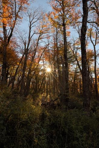 Jugando con el sol en el bosque