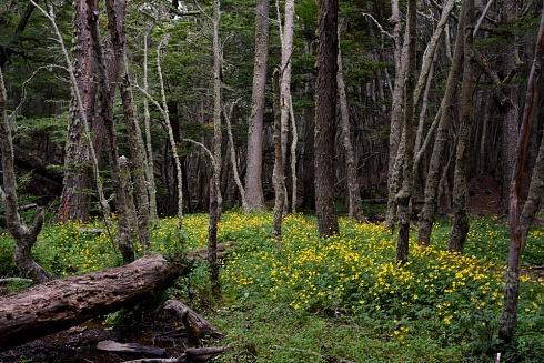 Bosque fueguino