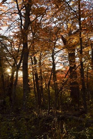 Luces en el Bosque II
