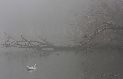 Neblina en Palermo
