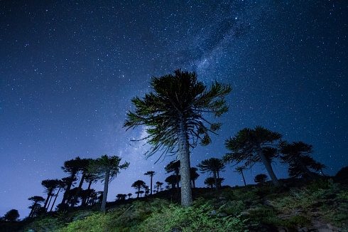 Estrellando araucarias