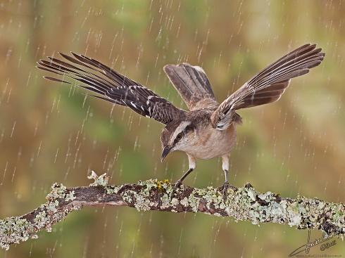 Posando bajo la lluvia
