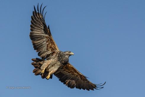 A volar ...