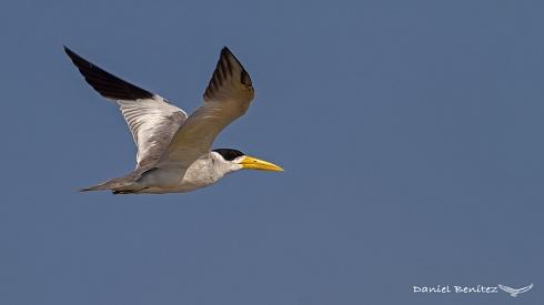 Volando a baja velocidad - Atí