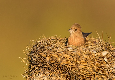 Jugando al nido