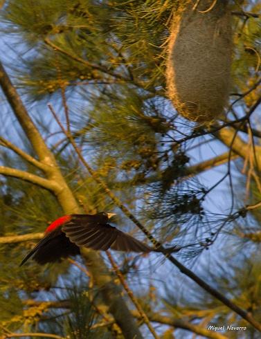 Llegando al nido... DEDICADA
