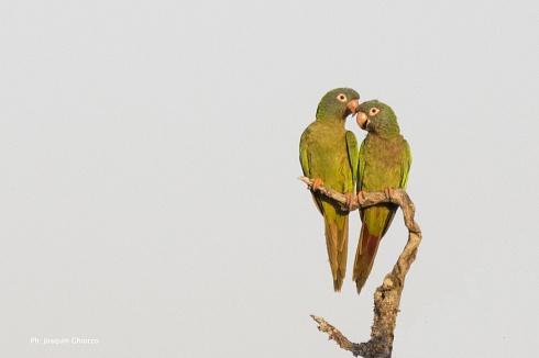 Feliz día de los enamorados ...