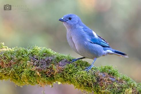 El principe azul...