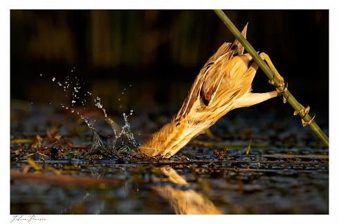 Pesca Mortal...