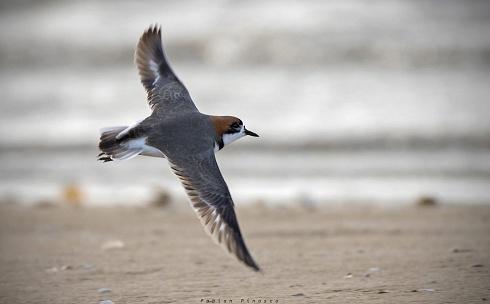 Sobrevolando la costa...