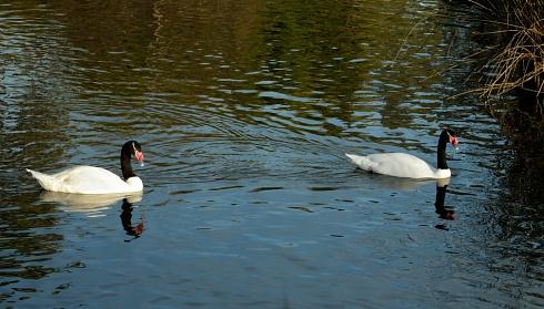 El lago de los cisnes...