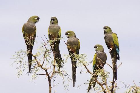 Barranqueros