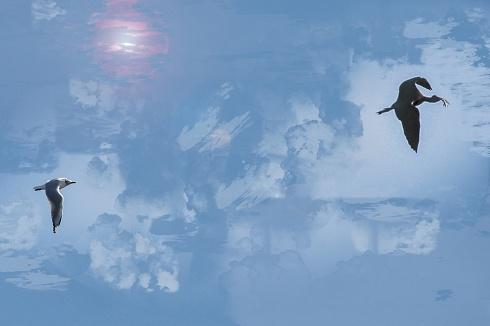 Drama bajo el cielo de Ceibas.