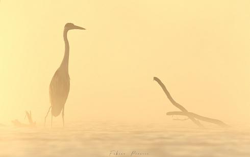 Siluetas en la niebla... (dedicada)