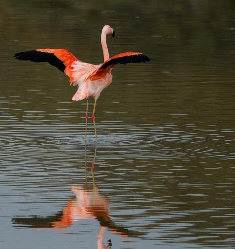 Al fin el flamingo!