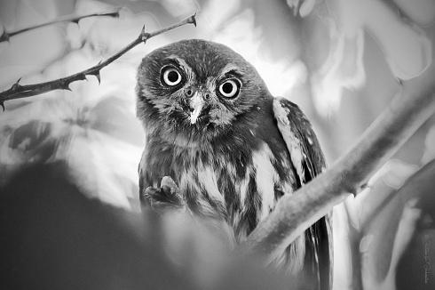 Mirada en blanco y negro.