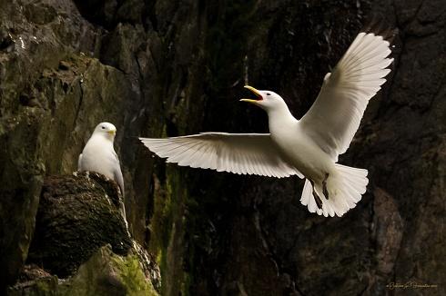 Anunciado la llegada al nido.