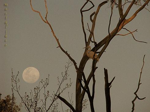 La Garza y la Luna