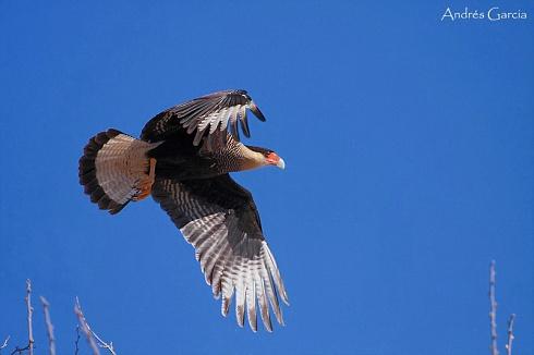 A volar!