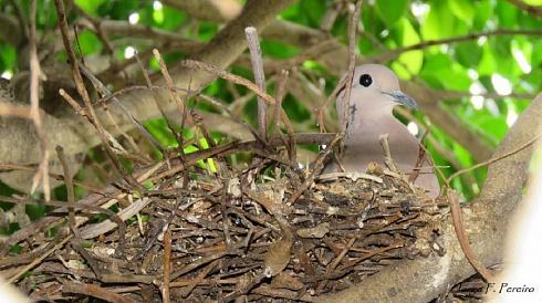 otro nido