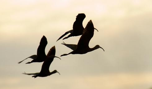 Cuervosiluetas