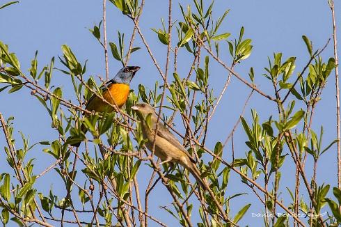 El y ella - Naranjero