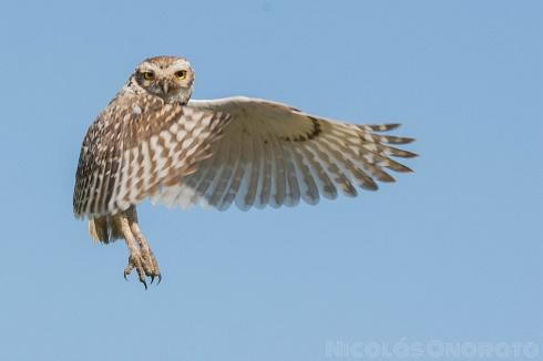Arte de volar