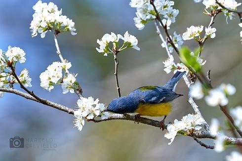 Sinfonía de primavera...