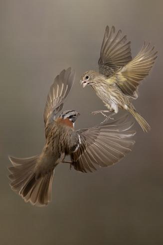 Combate aereo