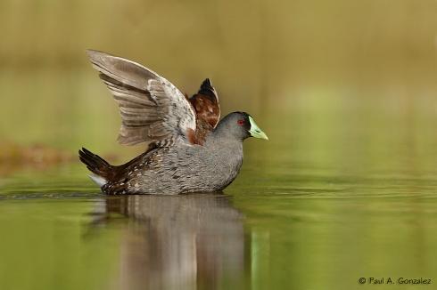 Secando las alas