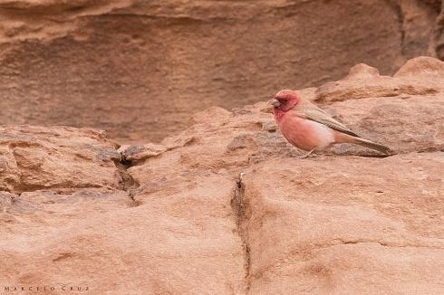 Camachuelo del Sina� en Wadi Rum, Jordania