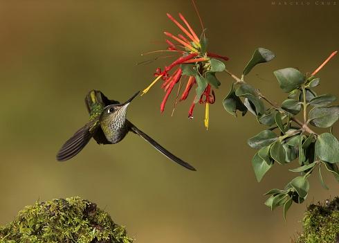 En busca  del  nectar