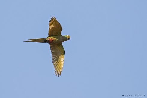 Otra belleza  de Pantanal