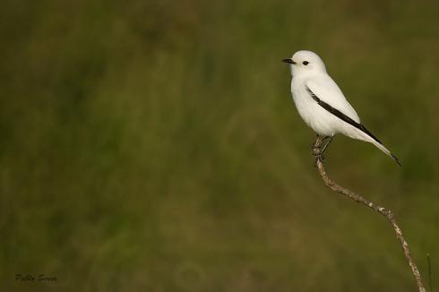 Belleza blanca...