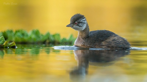 Nadando en oro...