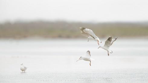 Ense�andote a volar