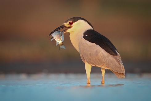 Bruja con pesca