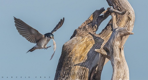 Ingreso al nido