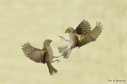 KUNG-FU BIRDS