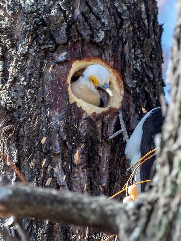 Limpiando el nido (ver en alta)