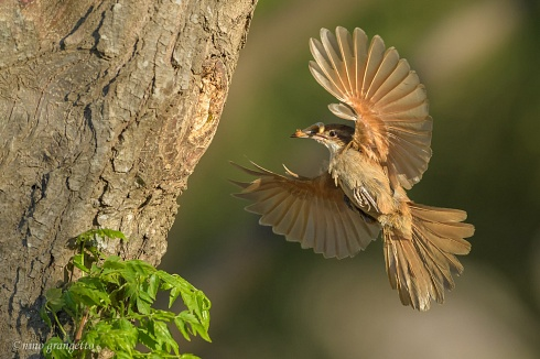 LLegando al nido