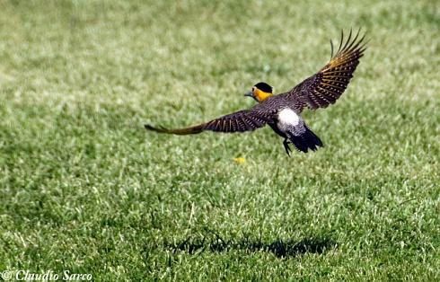 Abanico de alas