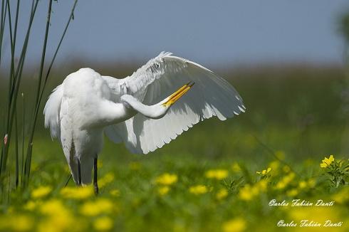 Limpiando alas