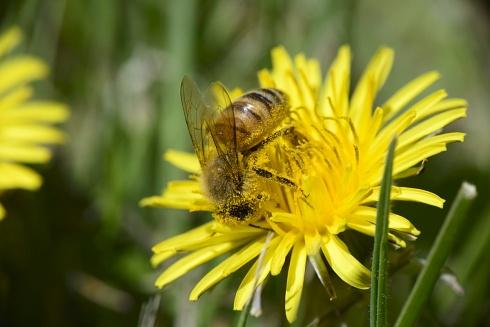cargada de polen