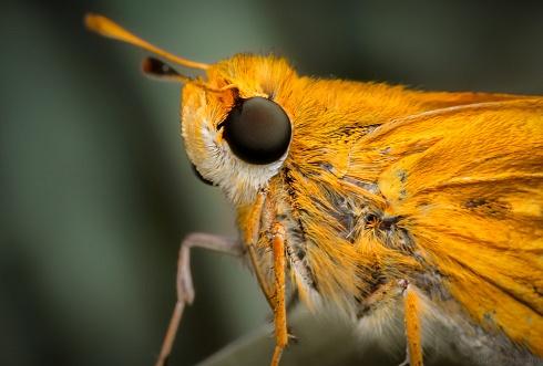 Retrato Saltarina Amarilla