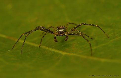 Y dale con la arañas...