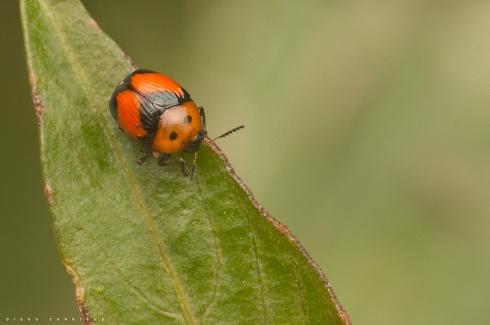 Mini escarabajo